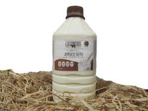 Jersey Köy İneği Sütü